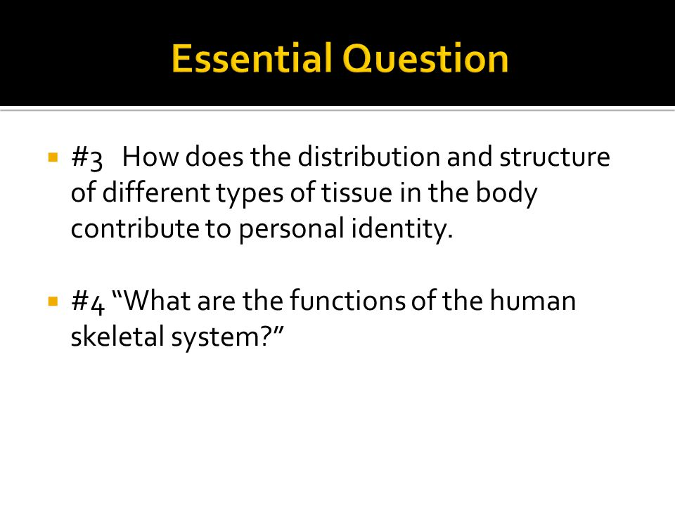 Essential Question #3 How does the distribution and structure of different types of tissue in the body contribute to personal identity.