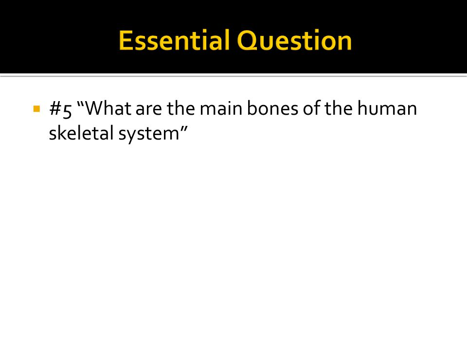 Essential Question #5 What are the main bones of the human skeletal system