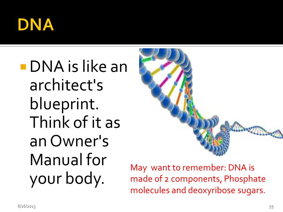 DNA DNA is like an architect s blueprint. Think of it as an Owner s Manual for your body.