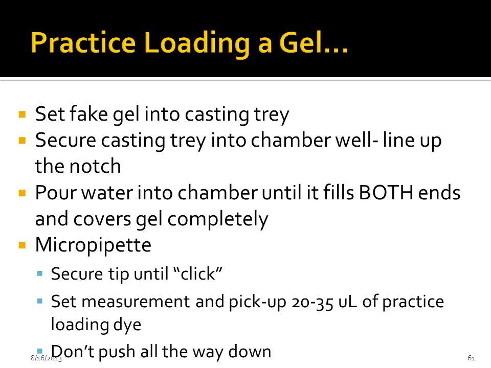 Practice Loading a Gel…