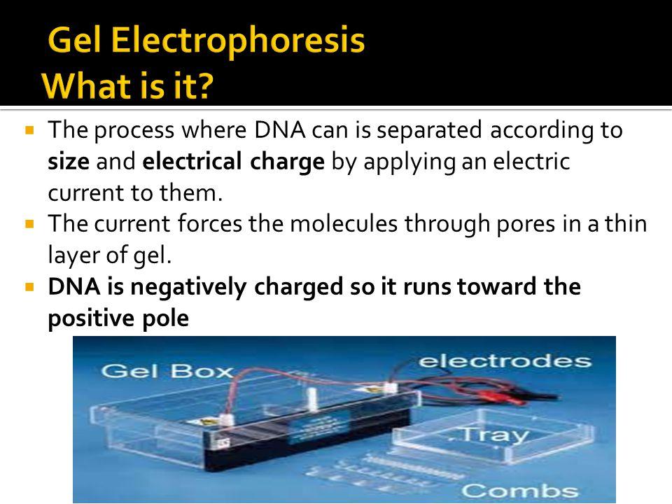 Gel Electrophoresis What is it