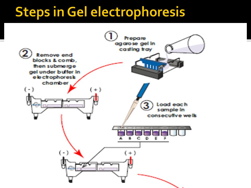 Steps in Gel electrophoresis