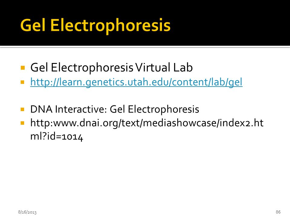 Gel Electrophoresis Gel Electrophoresis Virtual Lab