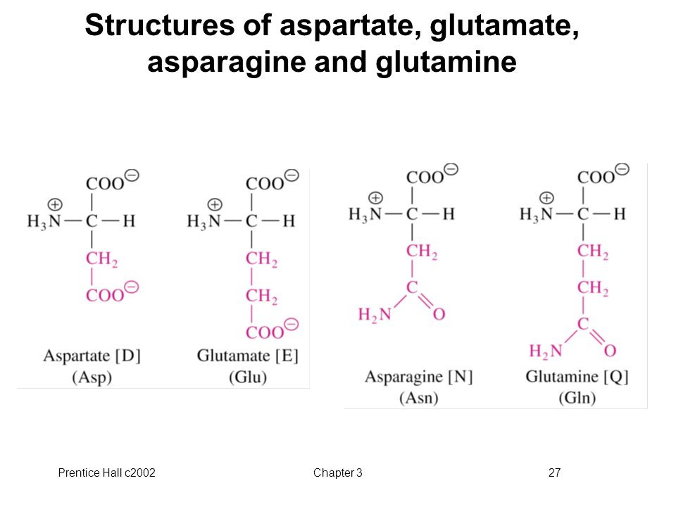 Structures of aspartate, glutamate, asparagine and glutamine