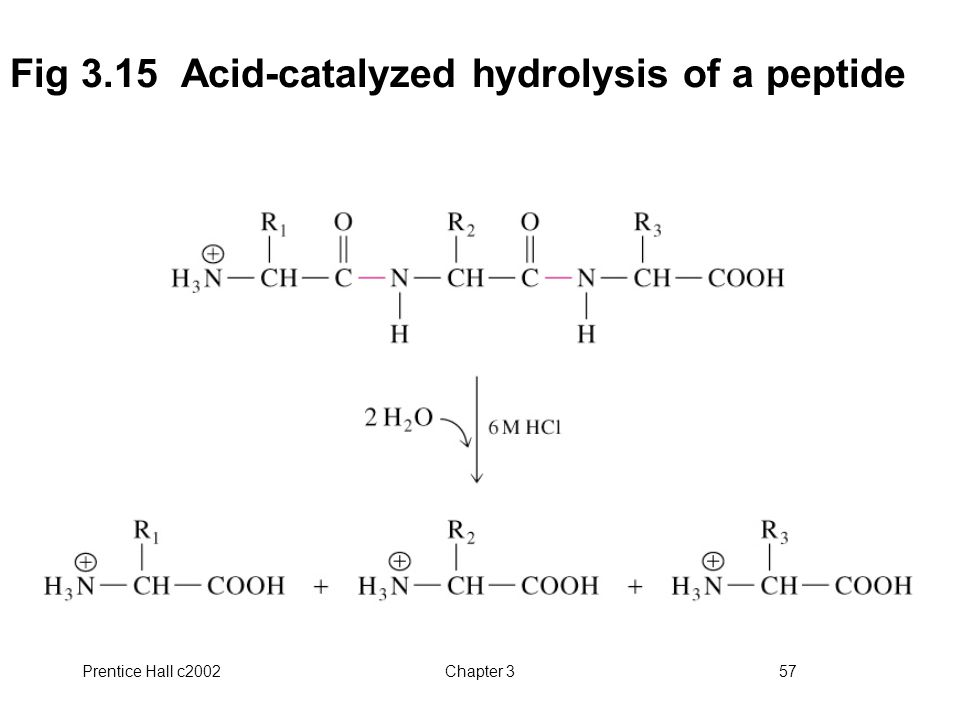 Fig 3.15 Acid-catalyzed hydrolysis of a peptide