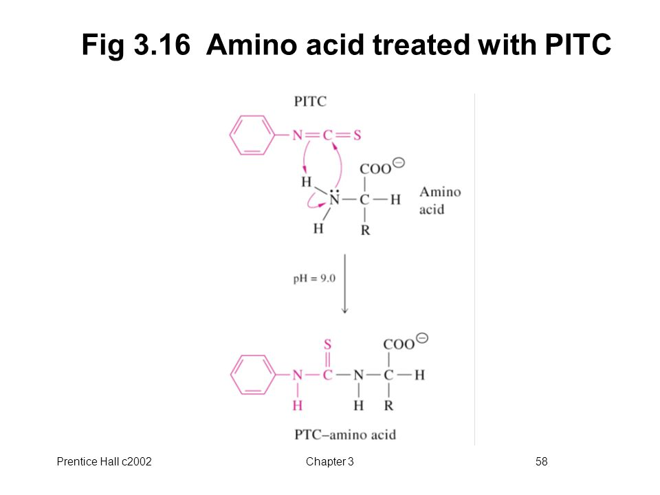 Fig 3.16 Amino acid treated with PITC