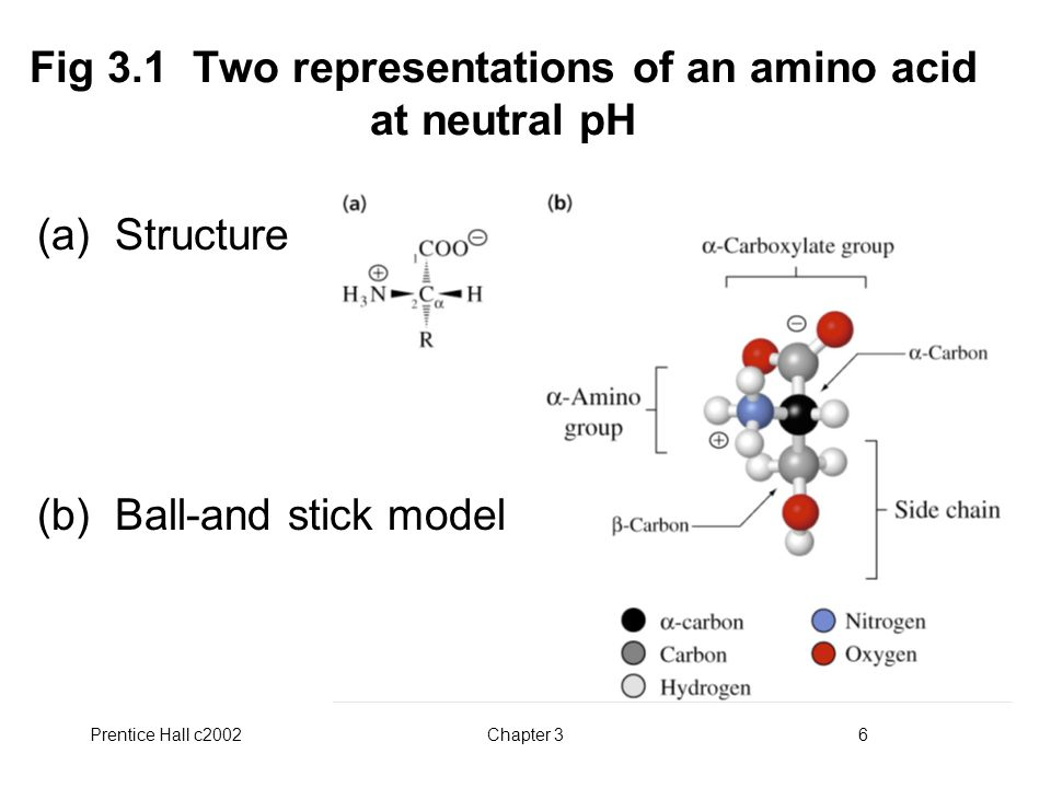 Fig 3.1 Two representations of an amino acid at neutral pH