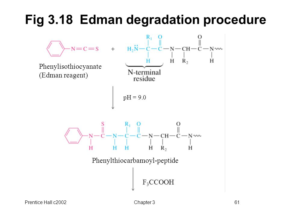 Fig 3.18 Edman degradation procedure