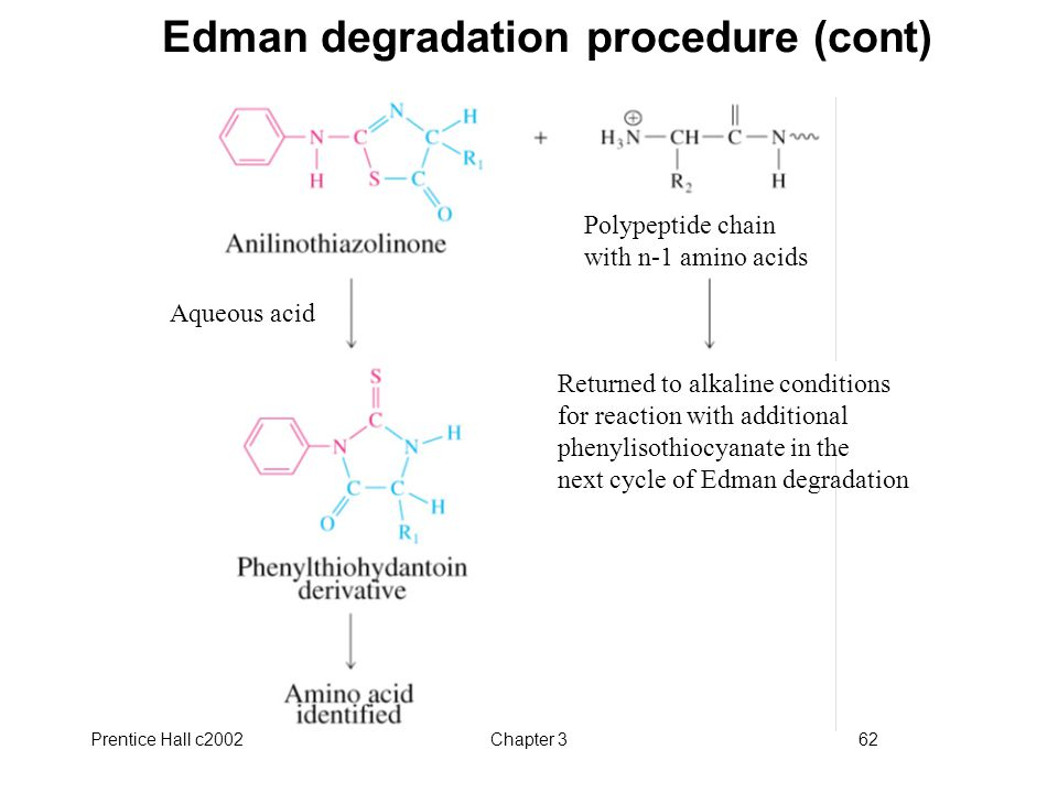 Edman degradation procedure (cont)