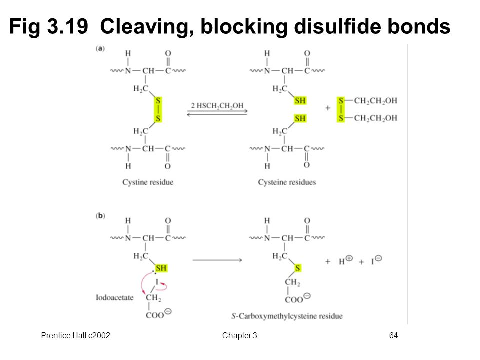 Fig 3.19 Cleaving, blocking disulfide bonds