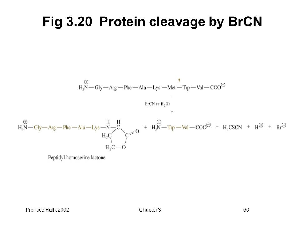 Fig 3.20 Protein cleavage by BrCN