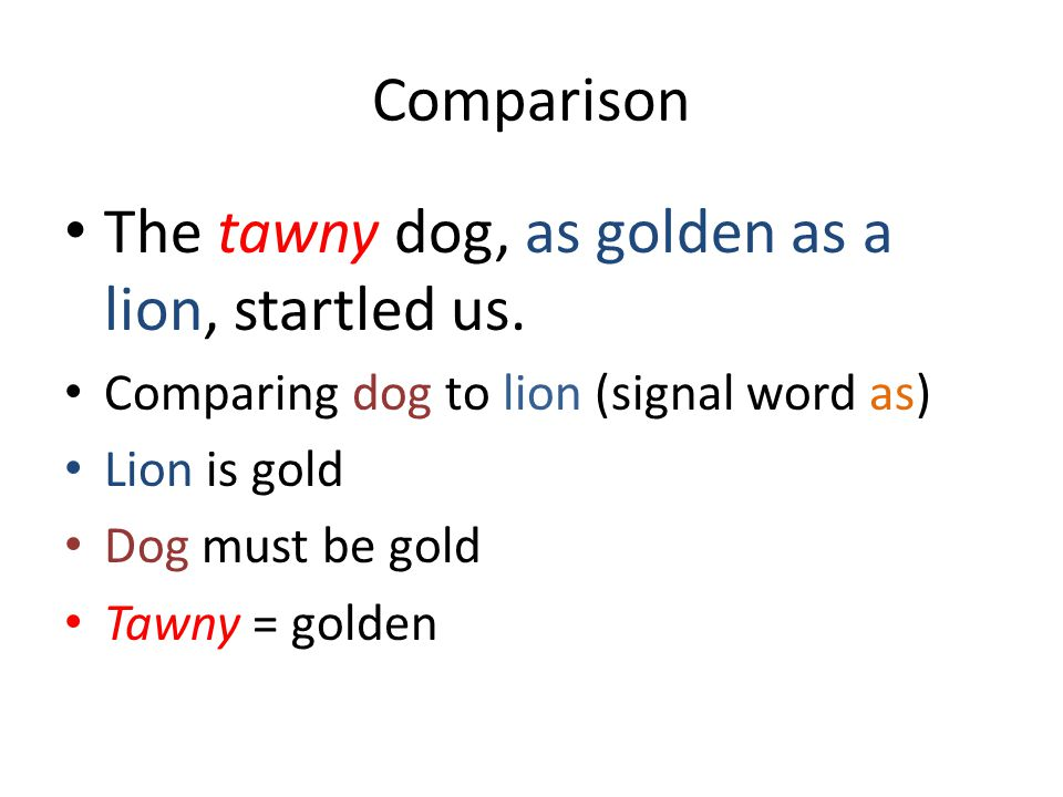 The tawny dog, as golden as a lion, startled us.