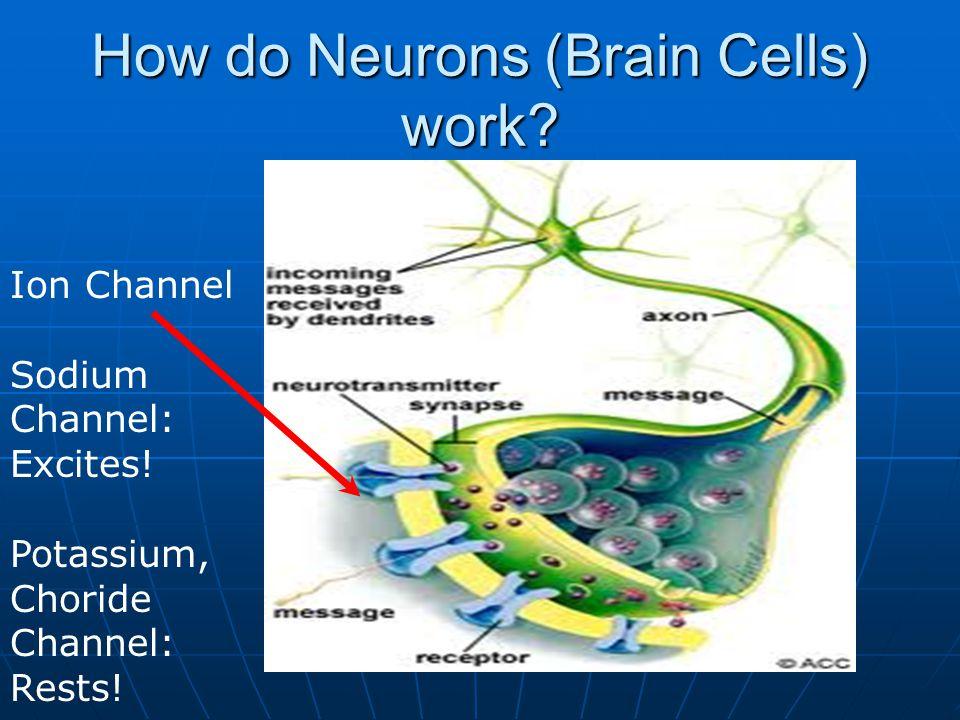 How do Neurons (Brain Cells) work