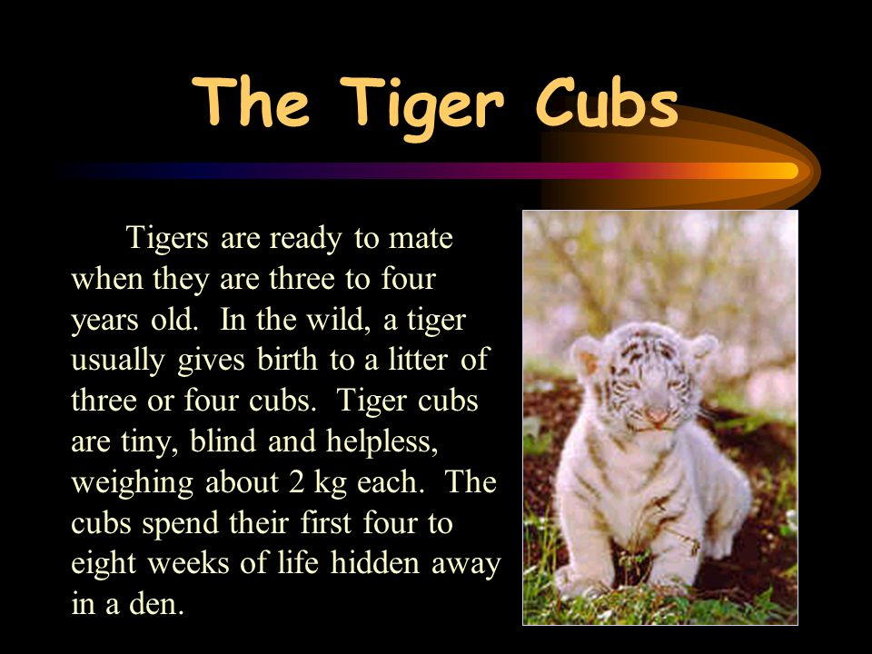 The Tiger Cubs