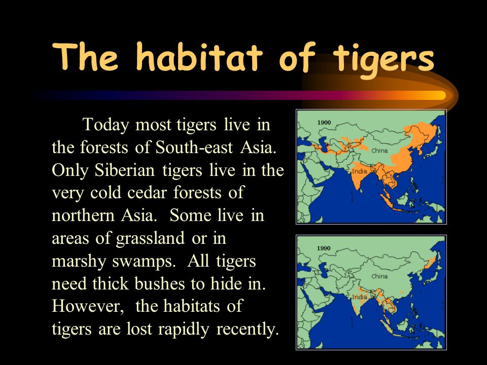 The habitat of tigers