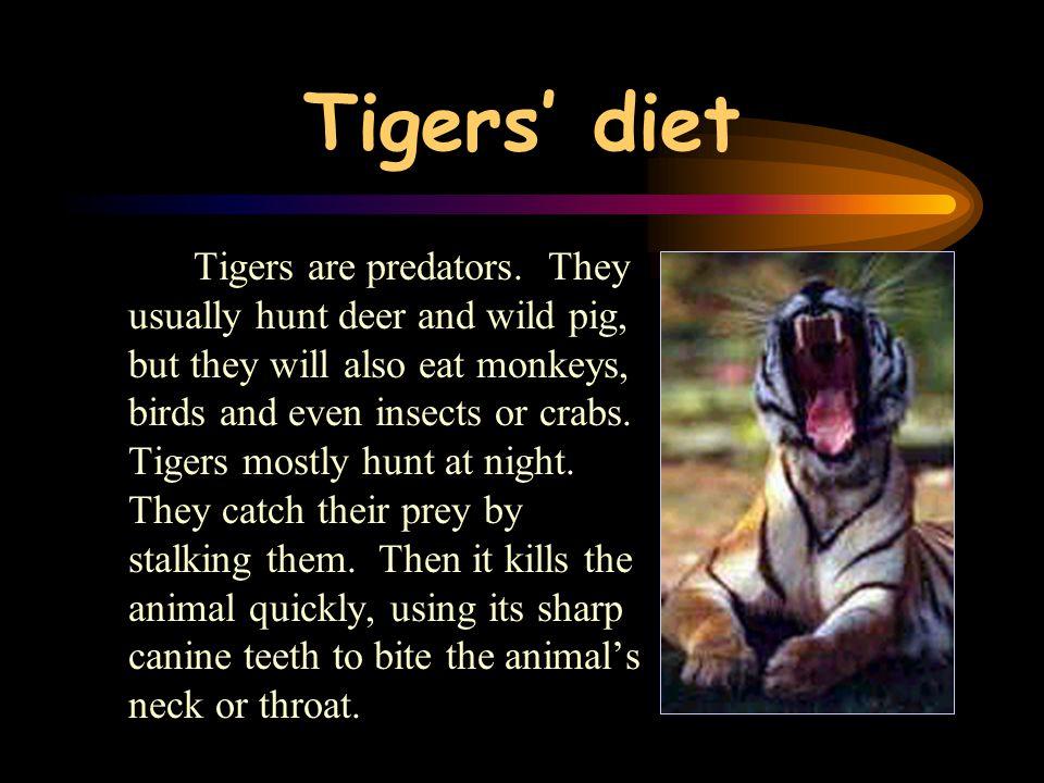 Tigers' diet