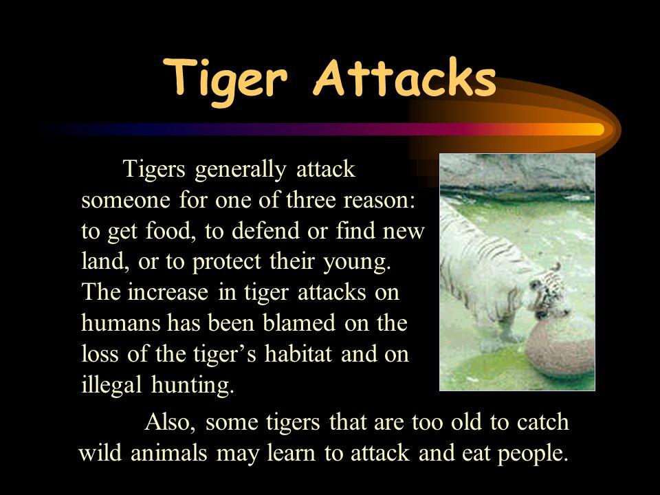Tiger Attacks