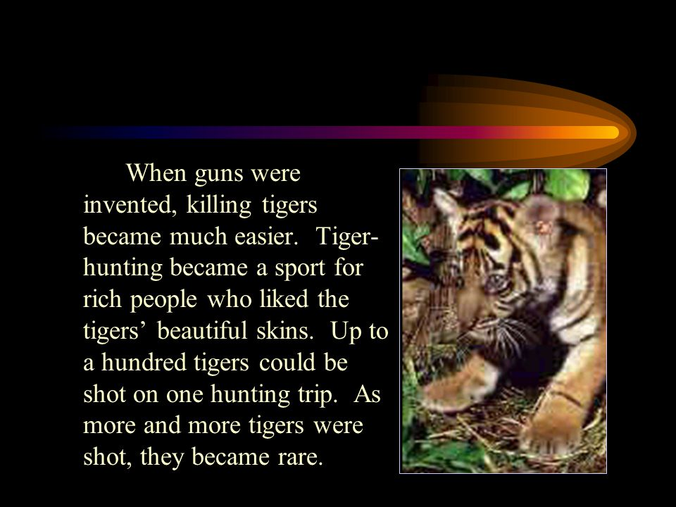 When guns were invented, killing tigers became much easier