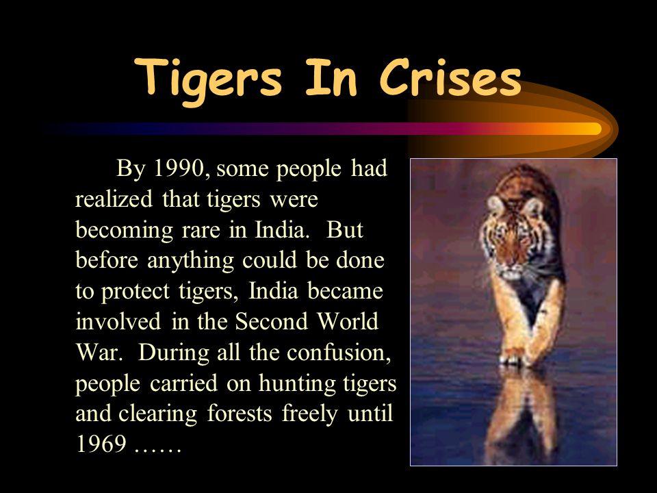 Tigers In Crises