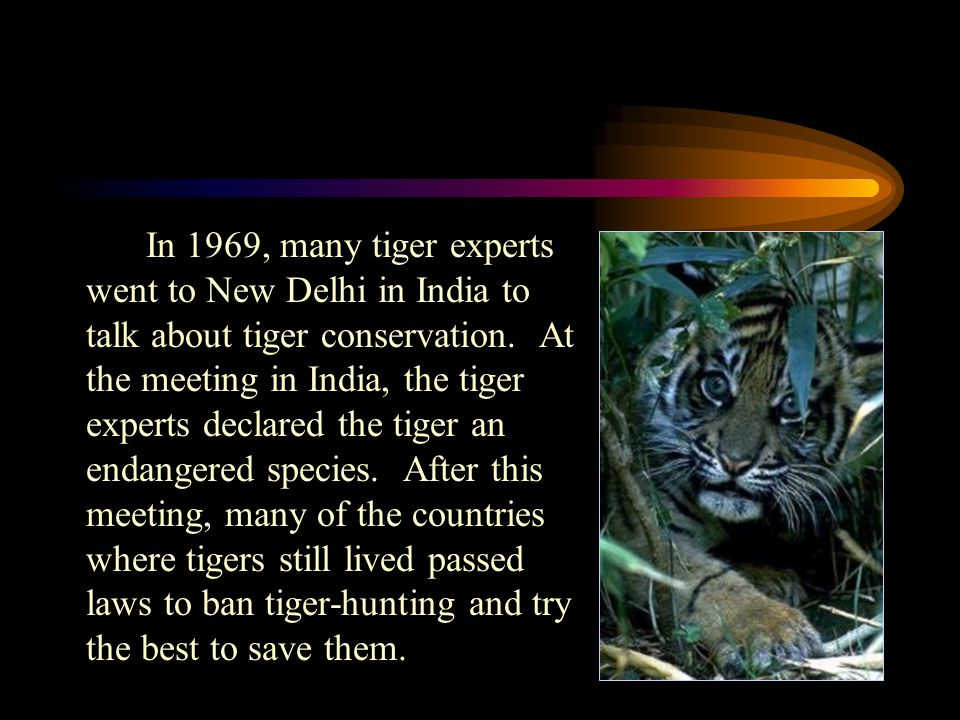 In 1969, many tiger experts went to New Delhi in India to talk about tiger conservation.