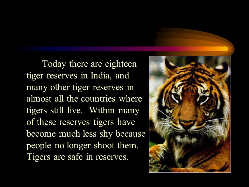 Today there are eighteen tiger reserves in India, and many other tiger reserves in almost all the countries where tigers still live.
