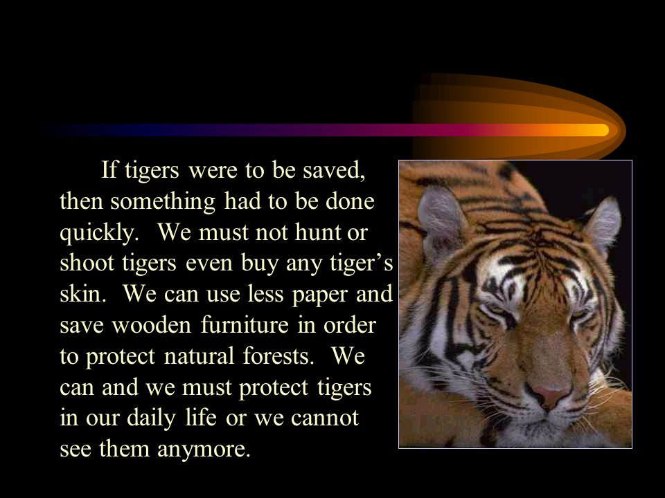 If tigers were to be saved, then something had to be done quickly