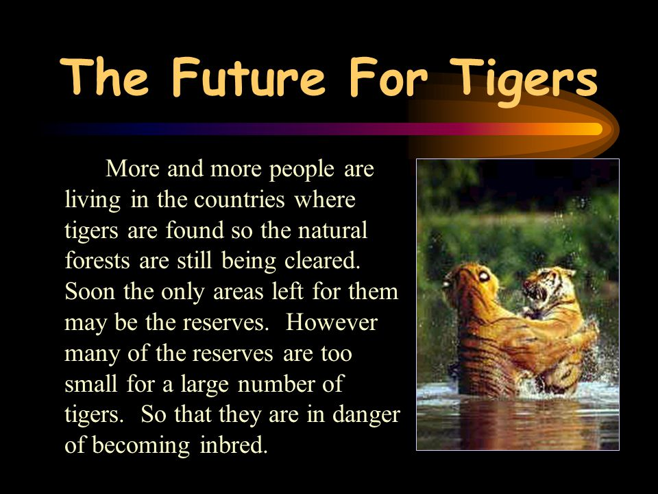 The Future For Tigers