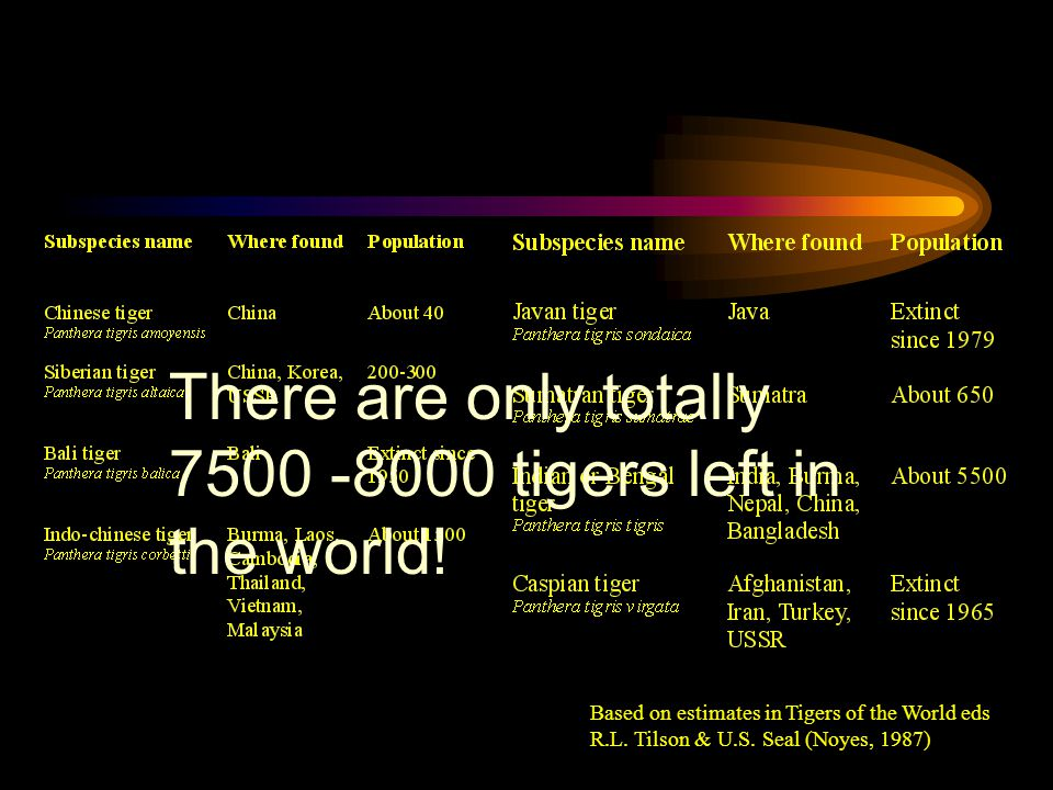 There are only totally 7500 -8000 tigers left in the world!