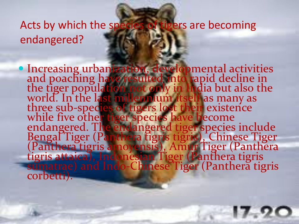 Acts by which the species of tigers are becoming endangered