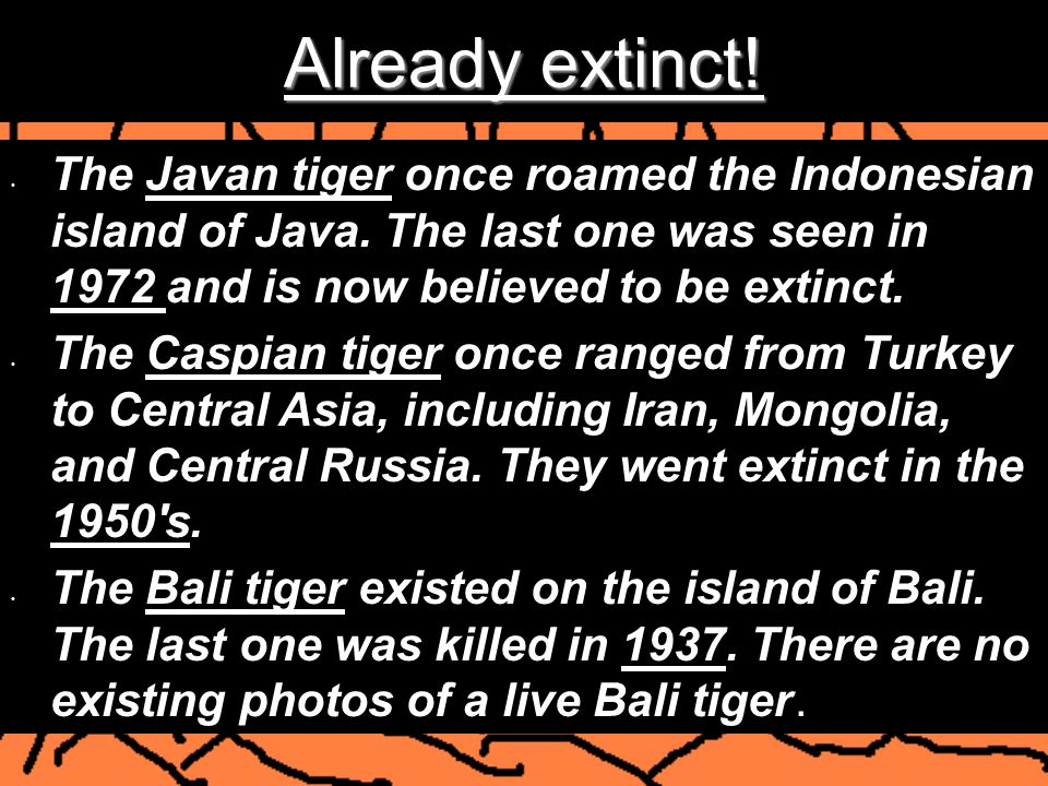 Already extinct! The Javan tiger once roamed the Indonesian island of Java. The last one was seen in 1972 and is now believed to be extinct.