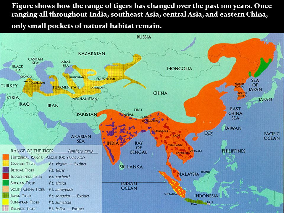 Figure shows how the range of tigers has changed over the past 100 years.