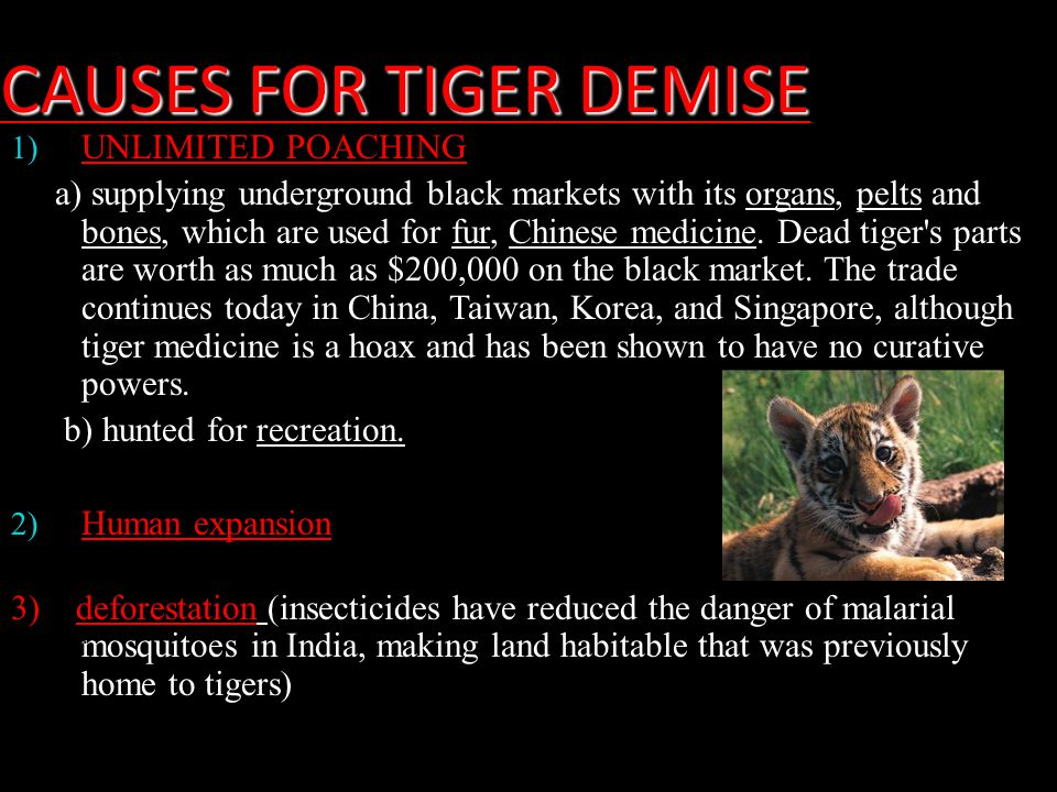 CAUSES FOR TIGER DEMISE