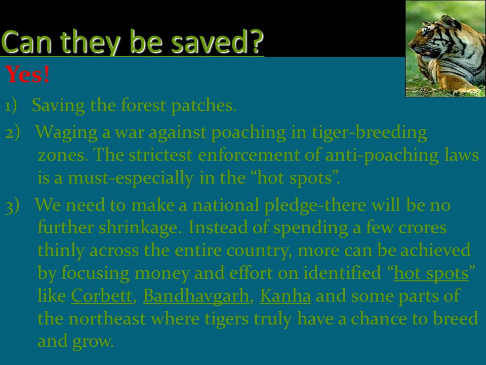 Can they be saved Yes! 1) Saving the forest patches.