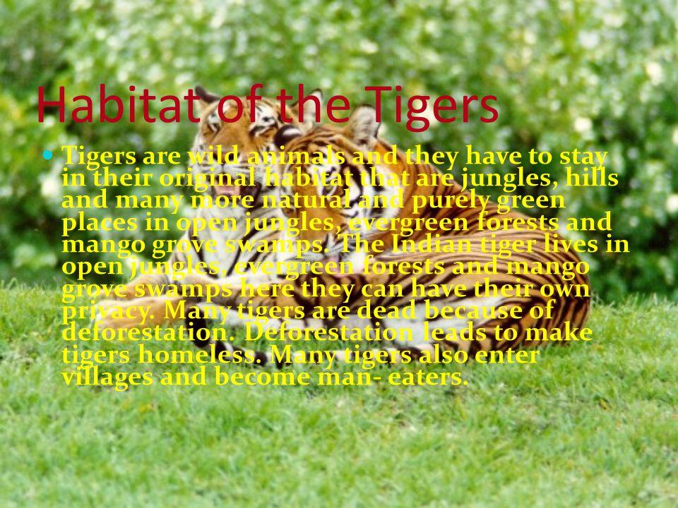Habitat of the Tigers