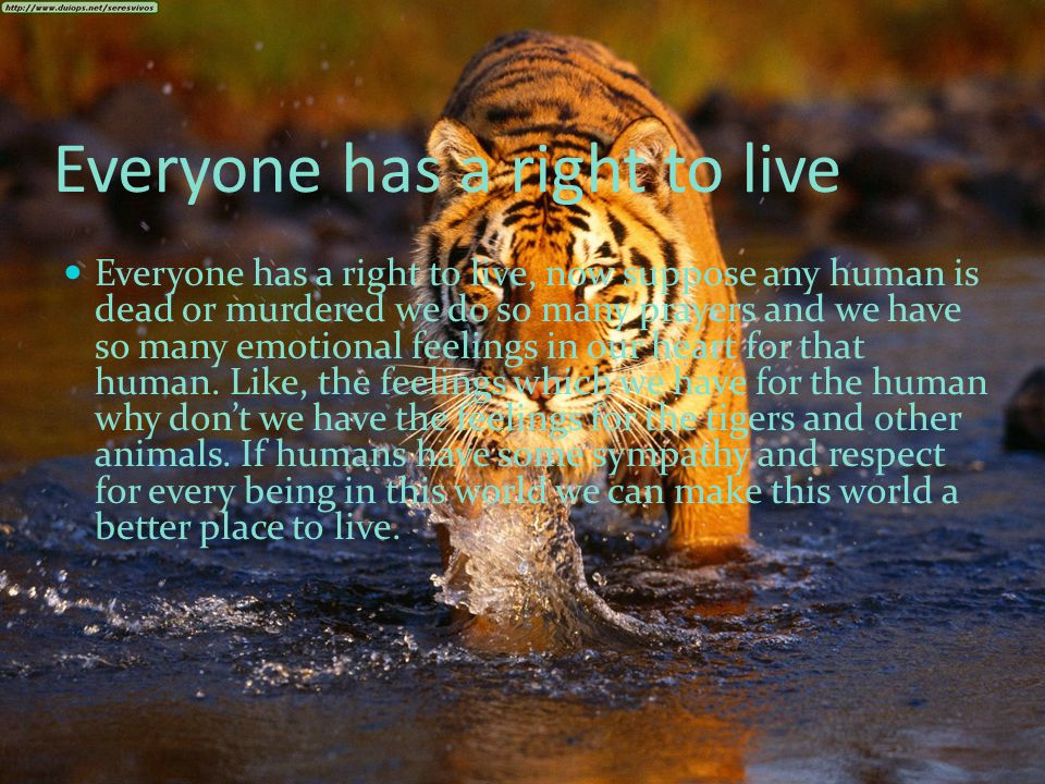 Everyone has a right to live