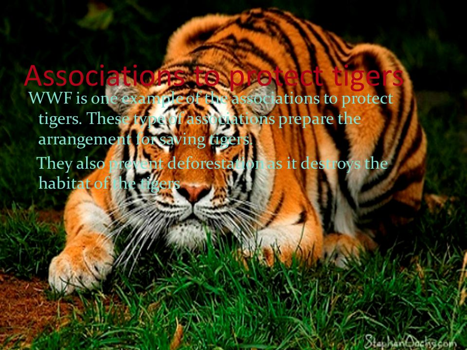 Associations to protect tigers