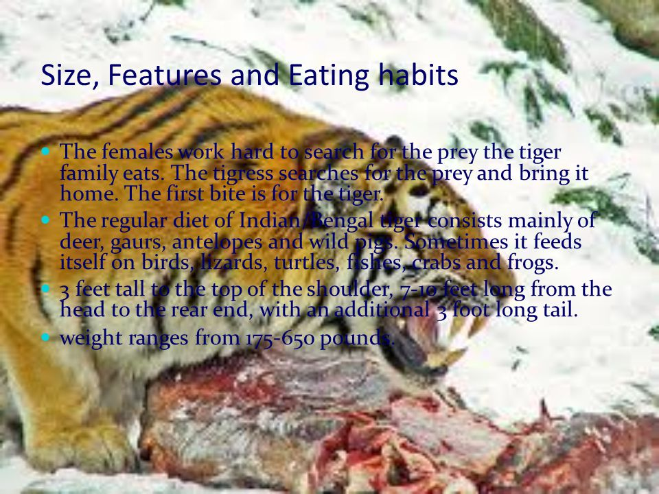Size, Features and Eating habits
