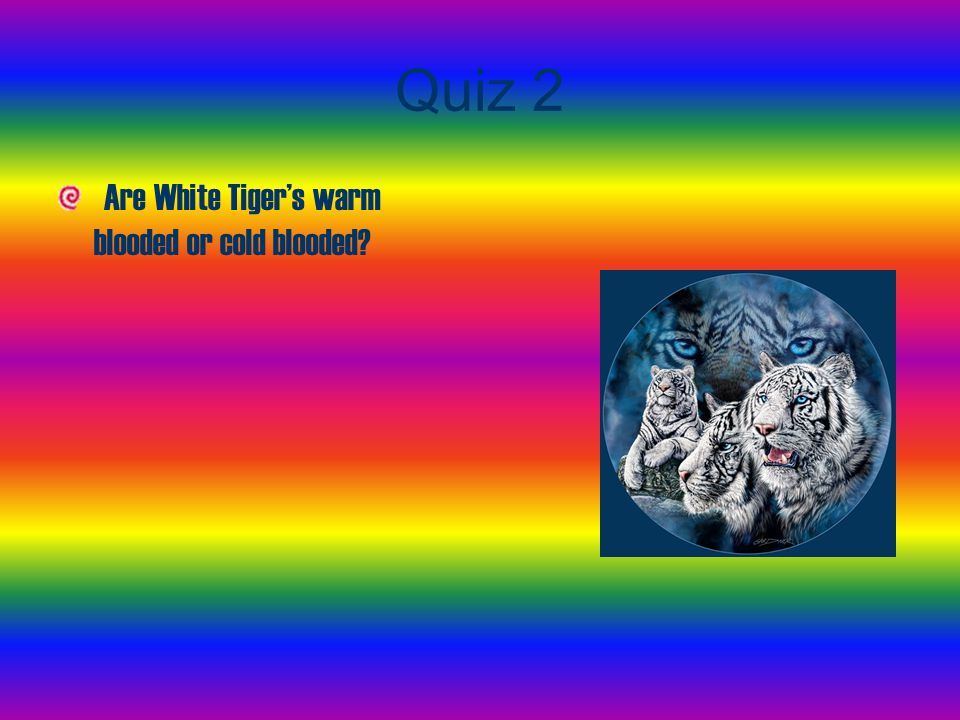 Quiz 2 Are White Tiger's warm blooded or cold blooded