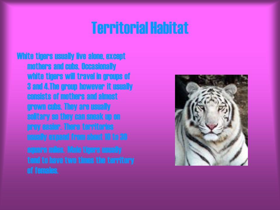 Territorial Habitat