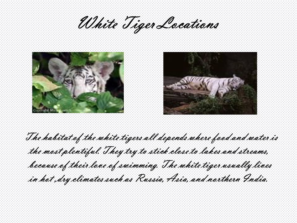 White Tiger Locations
