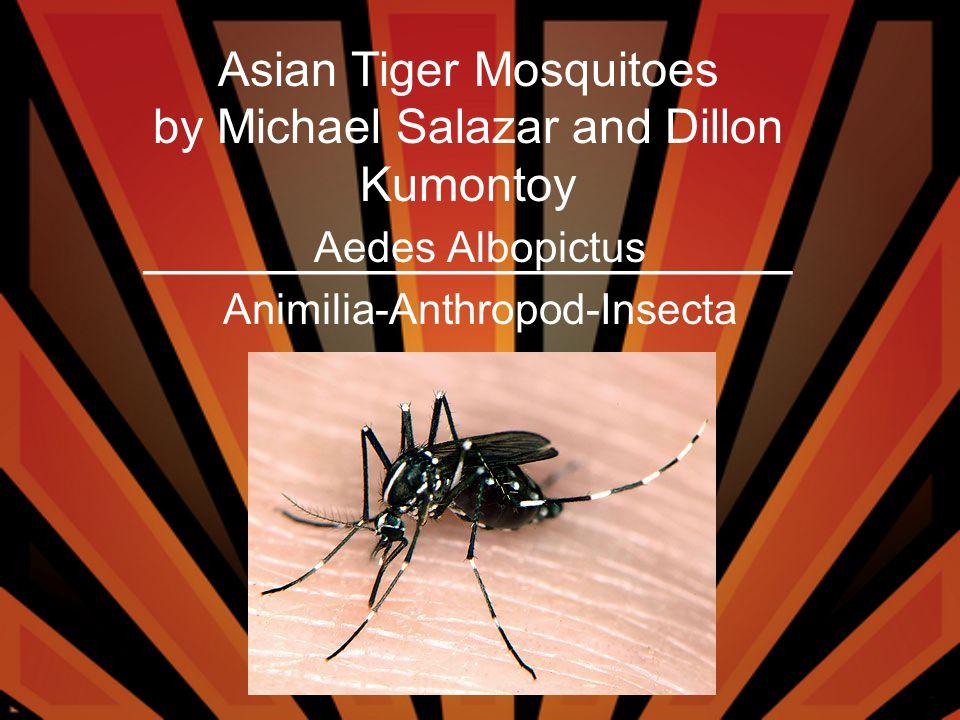 Aedes Albopictus Animilia-Anthropod-Insecta