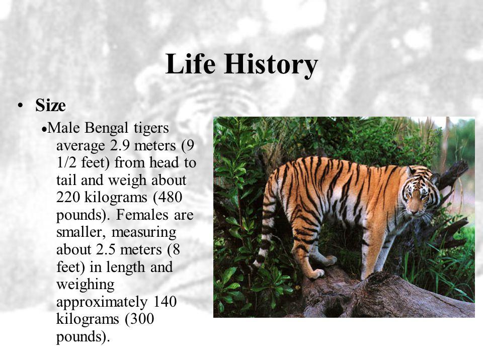 Life History Size.