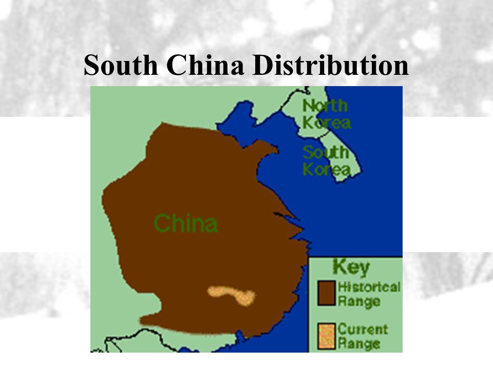South China Distribution
