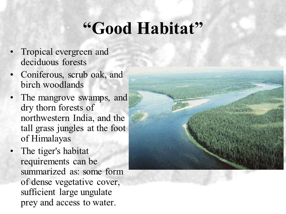 Good Habitat Tropical evergreen and deciduous forests