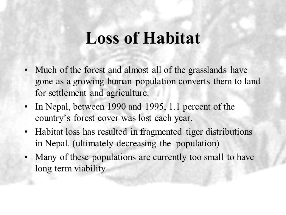 Loss of Habitat