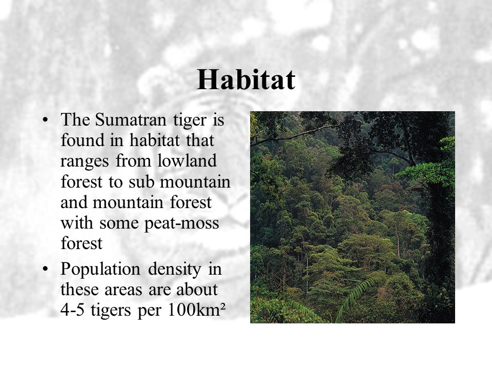 Habitat The Sumatran tiger is found in habitat that ranges from lowland forest to sub mountain and mountain forest with some peat-moss forest.