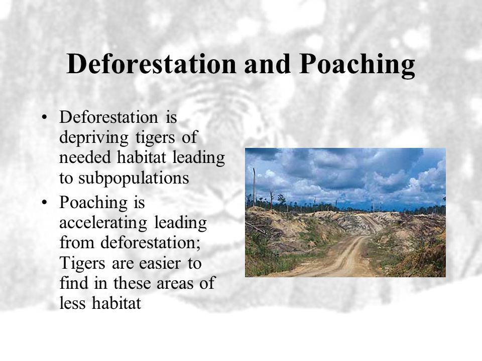 Deforestation and Poaching