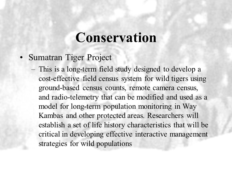 Conservation Sumatran Tiger Project