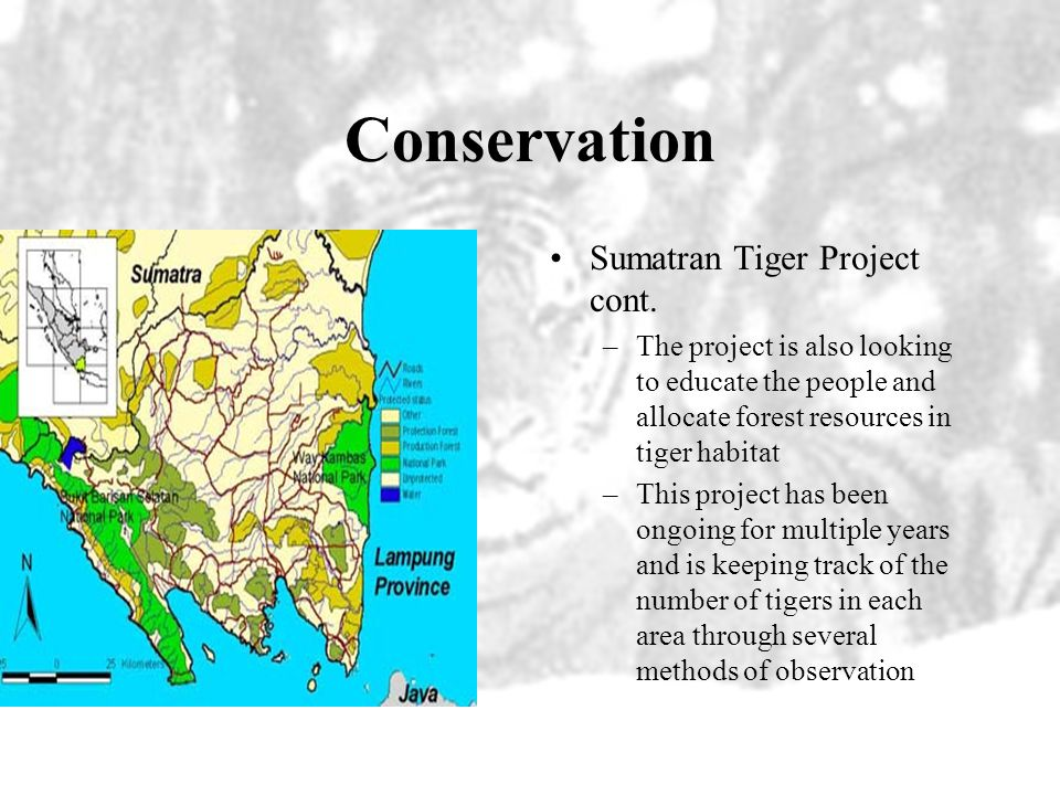 Conservation Sumatran Tiger Project cont.