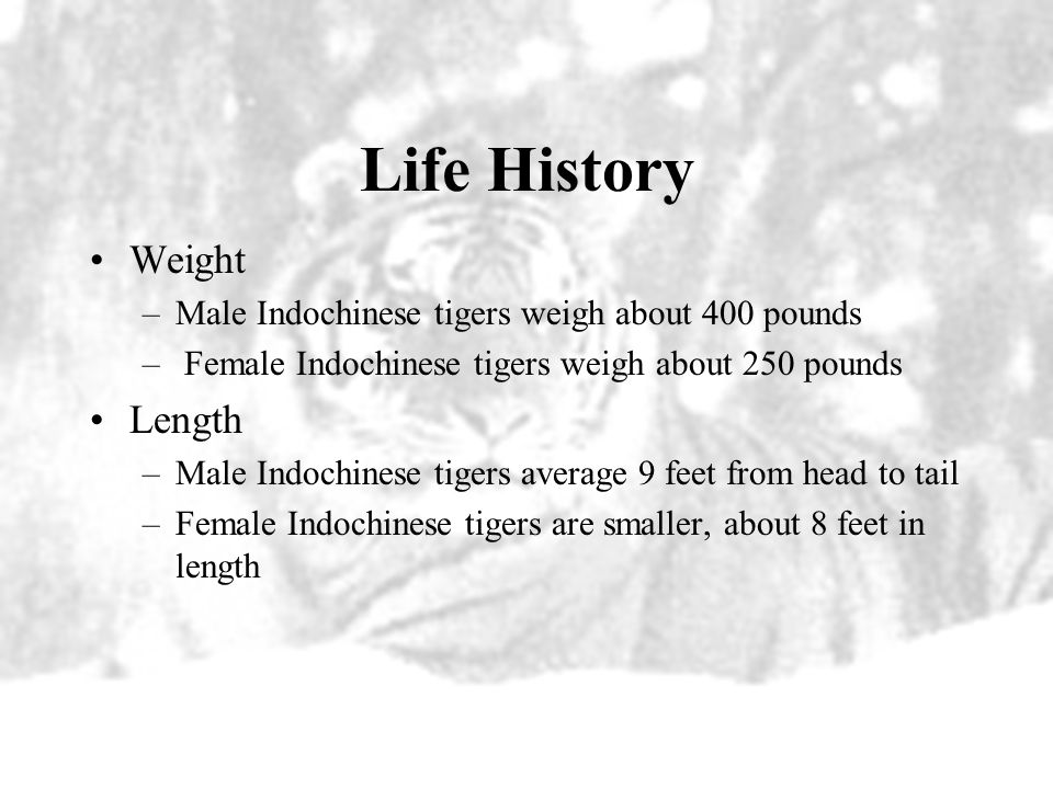 Life History Weight Length